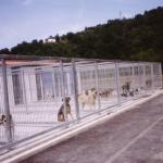 albergue-animales-langreo